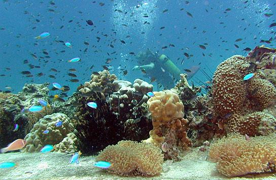 Ban 39 s diving resort padi course discover scuba diving - Ko tao dive resort ...