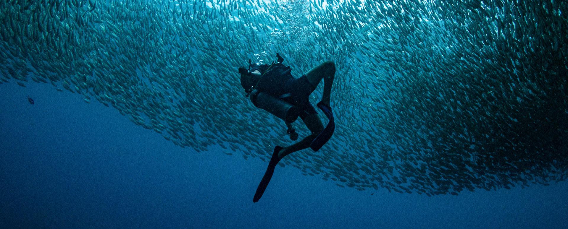 PADI Open Water Diver at Ban's Diving Koh Tao