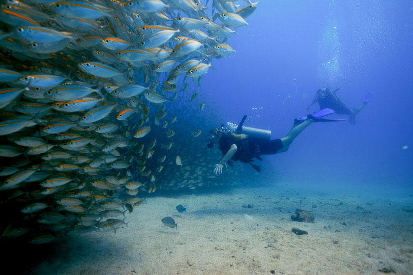 Ban's Fun Diving Koh Tao