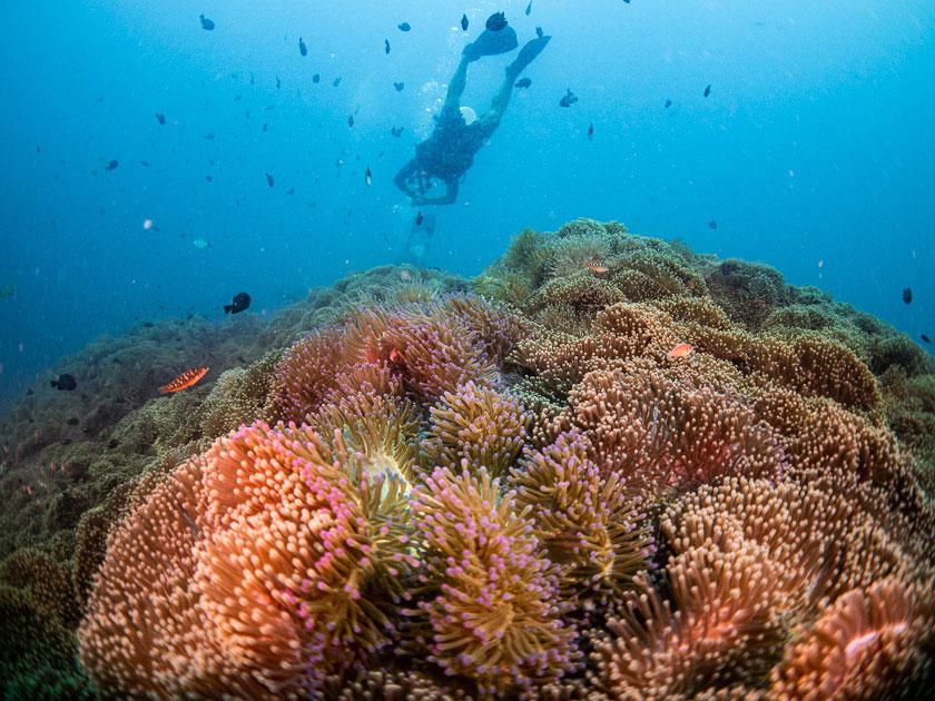 Kids Programs Ban's Diving Koh Tao
