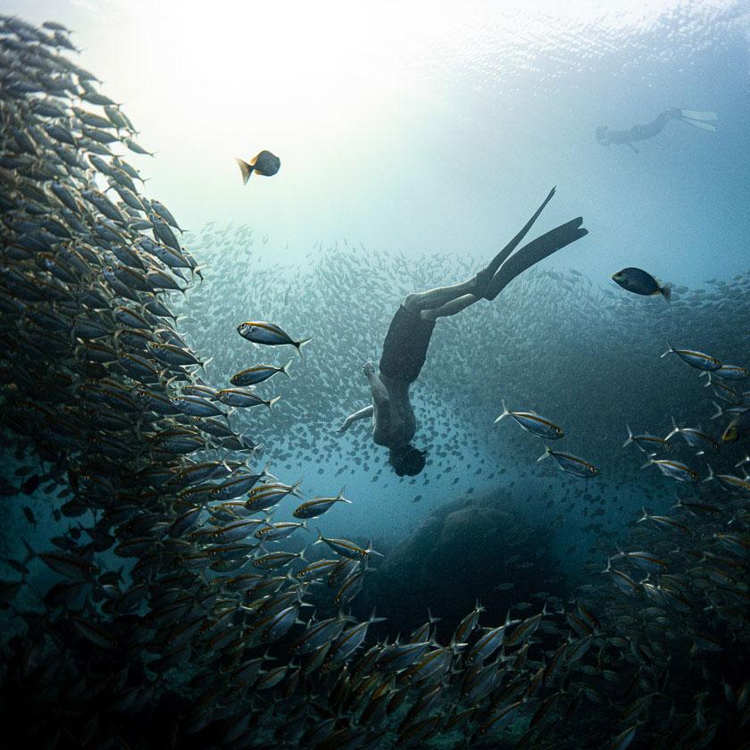 Ban's Freediving Koh Tao